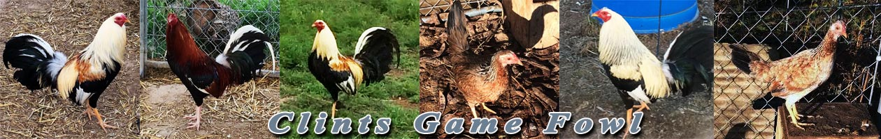 Clints Game Fowl